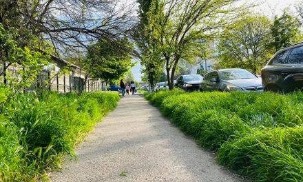 Noi obligații pentru constănțenii care stau la bloc: tăiat iarba, dezinsecție, măturat trotuare, cumpărarea de pubele și angajarea de firme pentru colectare deșeuri