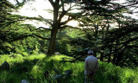 Tragedie la Constanța. Trei lucrători de la spații verzi dispăruți de 5 zile în bălăriile din Parcul Tăbăcărie