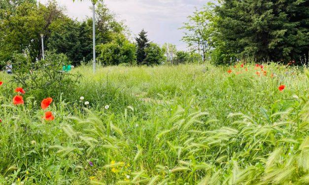 FOTO și VIDEO. Parcul din Constanța unde iarba plină de căpușe e mai înaltă decât copiii
